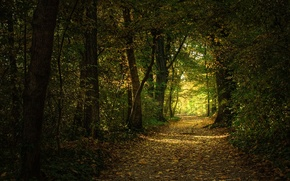 Picture leaves, trees, trail, Forest