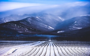 Picture winter, clouds, snow, fog, Mountains, the ranks, the vineyards