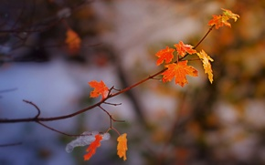 Picture nature, autumn, page