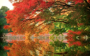 Picture autumn, trees, lake, Park, reflection, branch