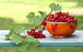 Picture leaves, branch, Cup, red, currants, garden