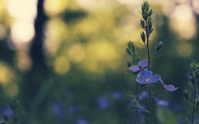 Wallpaper bokeh, spring, grass, blue, flower
