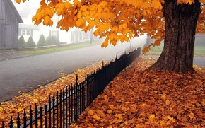 Picture road, autumn, leaves, tree, maple