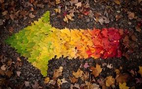 Picture autumn, leaves, arrow