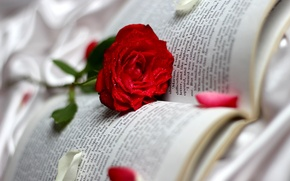Picture drops, rose, petals, book, red, page