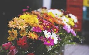 Picture flowers, bouquet, petals