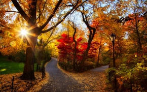 Picture Park, road, leaves, fall, leaves, path, sunset, colors, trees, walk, autumn, forest, park, forest, nature, ...