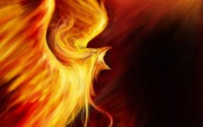 Picture fire, bird, fantasy, art, Phoenix