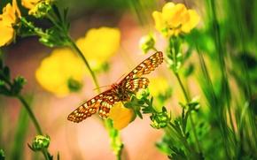 Picture macro, flowers, butterfly, bokeh