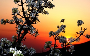 Picture the sky, sunset, flowers, tree, garden