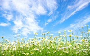 Picture field, summer, the sky, the sun, clouds, blue, chamomile