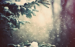 Picture winter, forest, snow, trees, branch, Nature, weather, wallpapers, pine