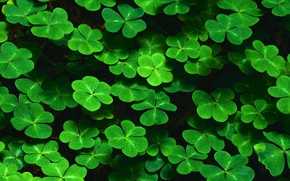 Picture leaves, thickets, clover