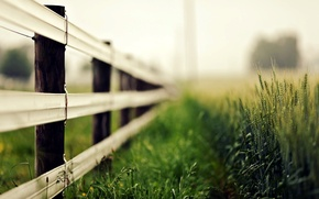 Picture wheat, greens, grass, macro, nature, background, widescreen, Wallpaper, the fence, rye, blur, fence, spikelets, the ...