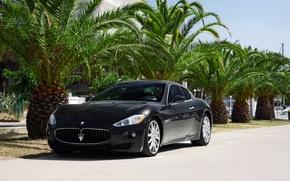 Picture Maserati, GranTurismo, Black, Palms