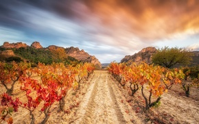 Picture the sky, nature, vineyard