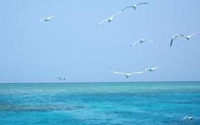 Picture sea, birds, nature