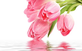 Wallpaper flowers, reflection, pink, Tulip, pink, flowers, for you, holidays, reflection, with love, with love, tulip, ...