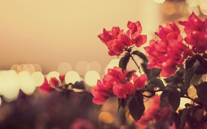 Picture macro, flowers, photo, Bush