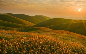 Wallpaper the sun, landscape, sunset, flowers, hills, CA, Sierra Nevada