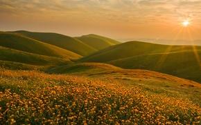 Picture the sun, landscape, sunset, flowers, hills, CA, Sierra Nevada