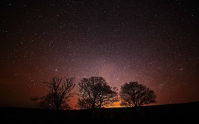 Picture space, stars, trees, night, silhouette