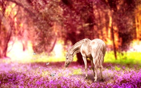 Wallpaper retouching, butterfly, horse, nature, flowers