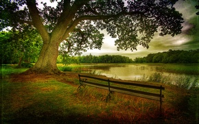 Picture nature, trees, leaves, tree, benches, lake, landscape, autumn, forest