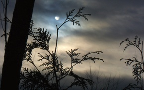 Wallpaper clouds, branches, fog, the moon