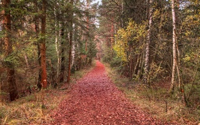 Picture forest, leaves, trees, trail, Autumn, forest, falling leaves, trees, nature, autumn, leaves, path, fall