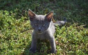 Wallpaper animals, cat, the sun, cats, kitty