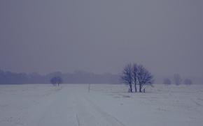 Picture road, winter, fog