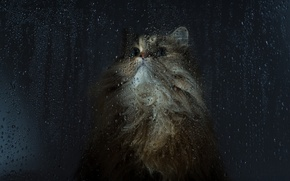Picture cat, glass, drops