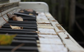 Picture autumn, leaves, macro, photo, keys, broken, old, piano, musical instrument
