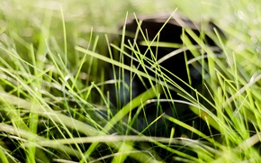 Picture grass, rays, background, mood, cap, Sunny