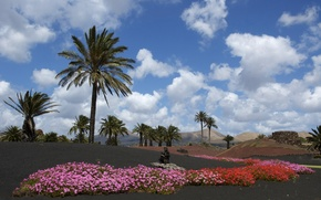 Wallpaper blue sky, Flowers, whiteclouds, Lanzarote, volcanic island, black ground