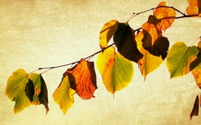 Picture leaves, style, background