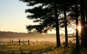 Picture field, forest, the sky, trees, fog, dawn, morning, USA, Alabama