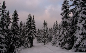 Picture winter, forest, snow, the evening, ate, frost, Norway, forest, trees, nature, winter, snow, evening, Norway, …