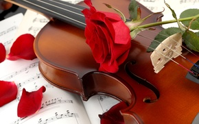 Picture flower, notes, violin, rose, petals, red