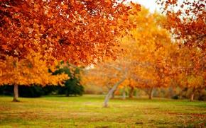 Picture autumn, leaves, macro, trees, nature, tree, foliage, leaf, focus, leaves, leaf, falling leaves, sheets, leaf ...