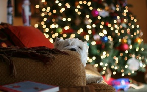 Picture lights, house, sofa, mood, tree, dog, pillow, blankets
