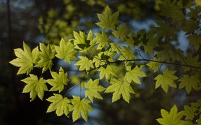 Picture macro, nature, foliage, branch