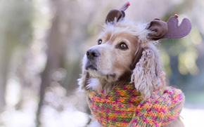 Picture eyes, Spaniel, decoration, ears, scarf, deer, new year, face, bokeh, knitted, Christmas, background, puppy, portrait, ...