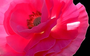 Wallpaper flower, macro, line, Mac, petals