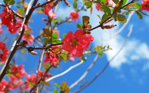 Picture spring, flowering, blossom, Spring, Flowering trees