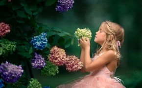 Wallpaper flowers, mood, girl, inflorescence, hydrangea