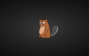 Wallpaper minimalism, animal, a descendant of Wolverine, tail, black background, crafty beaver, kogtistiy, beaver