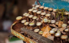 Picture Decay, Remington, Typewriter
