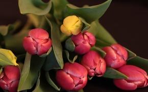 Picture leaves, nature, bouquet, petals, Bud, tulips
